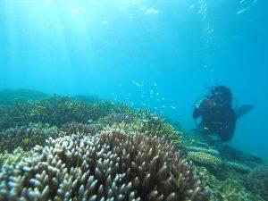 サンゴとゲスト様